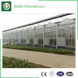 Serre chaude en verre commerciale de jardin pour culture de légumes