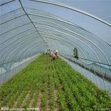 야채 & 꽃 플랜트 정원을%s 50m 갱도 온실은 천막을 증가한다