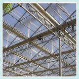 Estufa hidropónica tropical do tomate dos sistemas