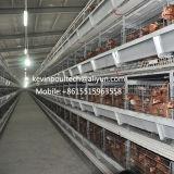 Type neuf cages du prix bas H de modèle de couche de batterie