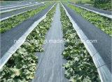 Stuoia agricola nera tessuta pp di controllo di Weed