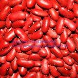 Фасоль почки качества еды красная