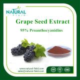Выдержка Proanthocyanidin семени виноградины выдержки завода продукта здравоохранения для внимательности кожи