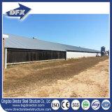 Naves de acero personalizado para pollos de engorde Agricultura