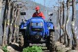 De Boomgaard van Lovol van Foton, de Tractor van de Wijngaard 50HP