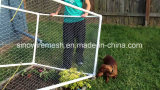 Sechseckige Huhn-Vogelaviary-Maschendraht-Filetarbeit