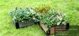 Относящим к окружающей среде кровать поднятая садом