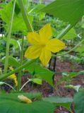 Взбираясь сетка поддержки завода/садовничая сетчатое /Bean & плетение гороха