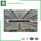 Estufa plástica de China para vegetais/fruta/flores