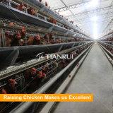 Qualité galvanisée à chaud un type cage de fil de poulet