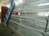 Automatischer/halbautomatischer Galvanizated Batterie-landwirtschaftliche Maschine-Huhn-Rahmen (JFLS0621)