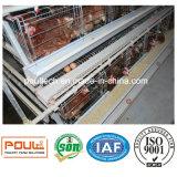 Equipamento automático da gaiola da galinha da camada