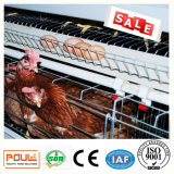 Клетка фермы оборудования цыплятины клетки цыпленка слоя батареи автоматическая