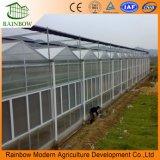 Invernadero de hoja de policarbonato de plástico tratado UV UV Venlo