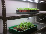 Kühlräume für Blumen