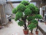 질 인공적인 회양목 장식 정원 플랜트