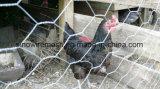 Hexgaonal Draht-Filetarbeit für Huhn-Draht Kurbelgehäuse-Belüftung beschichtete