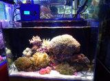 산호초를 위한 115cm 216W 3watts LEDs 먼 WiFi 수족관 LED