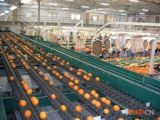 Équipement industriel automatique de jus de fruits