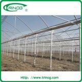 HandelsHydroponics Lettuce Greenhouse für Sale
