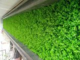 Alta qualità Artificial Plants e Flowers di Green Wall Gu-Wall1782000595773