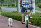 Haustier Outdoor Running Training Durable Hands Free Leash Belt für Dog Running Jogging Biking