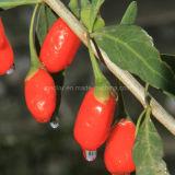 Baya secada Wolfberry orgánica de Goji del níspero