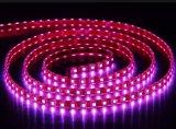 Striscia flessibile di colore LED delle strisce dell'UL 5050 RGB