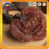 Duanwood Reishi Ganoderma Lucidum voor de Gezondheidszorg van de Huid