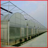 Invernadero de película plástica de plástico de un solo costo / de bajo costo para la venta en China