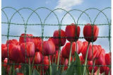 Rand-Zaun Rollen-Blume Maschendraht