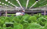 O diodo emissor de luz do poder superior cresce claro para plantas