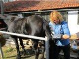 Explorador veterinario del ultrasonido del mejor uso al aire libre del precio