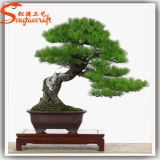Alto árbol de pino artificial de imitación de los bonsais del vidrio de fibra
