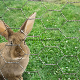 Compensation hexagonale galvanisée de treillis métallique pour la cage de crabot de lapin de poulet avec la qualité