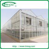 Estufa de vidro altamente forte com ventilação borboleta
