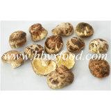 высушенное 2.5-3cm деформируют гриб Shiitake k