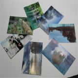(pouce 4*6) 100 Sheets Per Pack Resin Coated Matte Photo Paper (GAB-RCSA45)