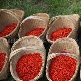 Baga secada vermelha de Goji do alimento biológico da nêspera