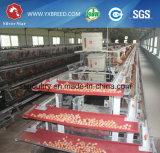 Hightop Selling Egg Collection System Cage de poulet à vendre