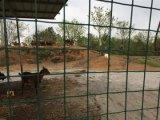 Palisade безопасности бассеина Китая используемый поставкой бледный/ковка чугуна ограждая панель Eurofence для сбывания