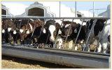 頑丈なパネルを囲っている牛ヤードのパネルによって電流を通される牛