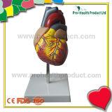 La escala del 1:1 del corazón en 2 porciones ensambla con número