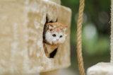猫の木、猫のツリーハウス、猫の木Scratcher