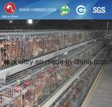 Cage de batterie automatique de grilleur de sortie d'usine à vendre