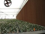 Pista de la refrigeración por evaporación del sistema de enfriamiento del invernadero de las aves de corral para la granja