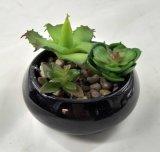 El Succulent artificial de las plantas florece bonsais de la decoración