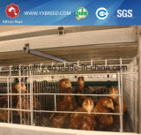 家禽装置の送り装置Hのタイプ5層の層の鶏のケージ
