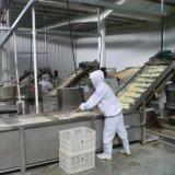 Granule déshydraté d'ail d'usine