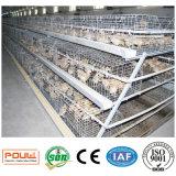 Grande capacité de matériel de volaille une cage de ferme de poulet de poulette de batterie